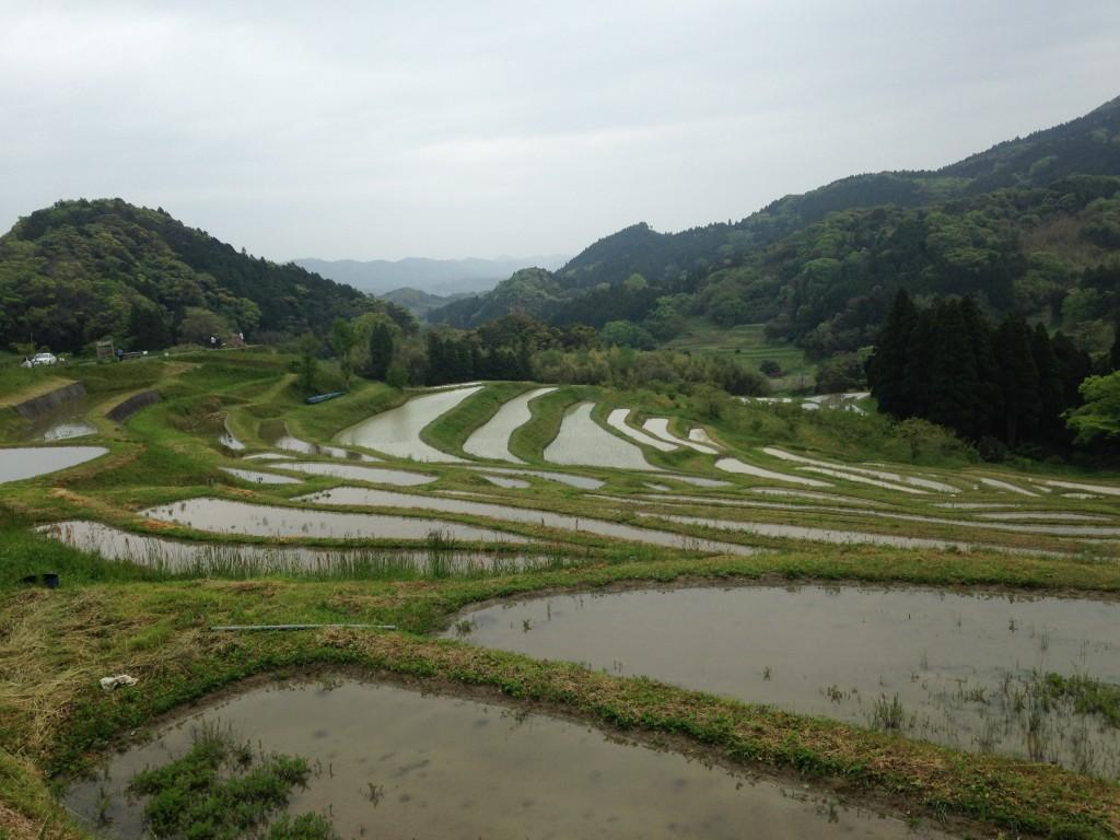 大山千枚田2
